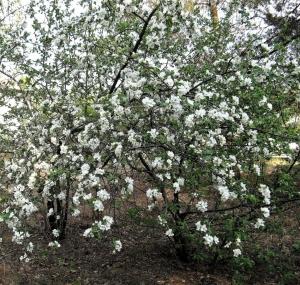 ,wiosna 2012,ferie,adam 016