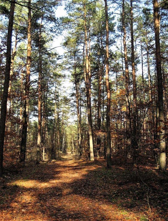Głosków-listopad 2008 026