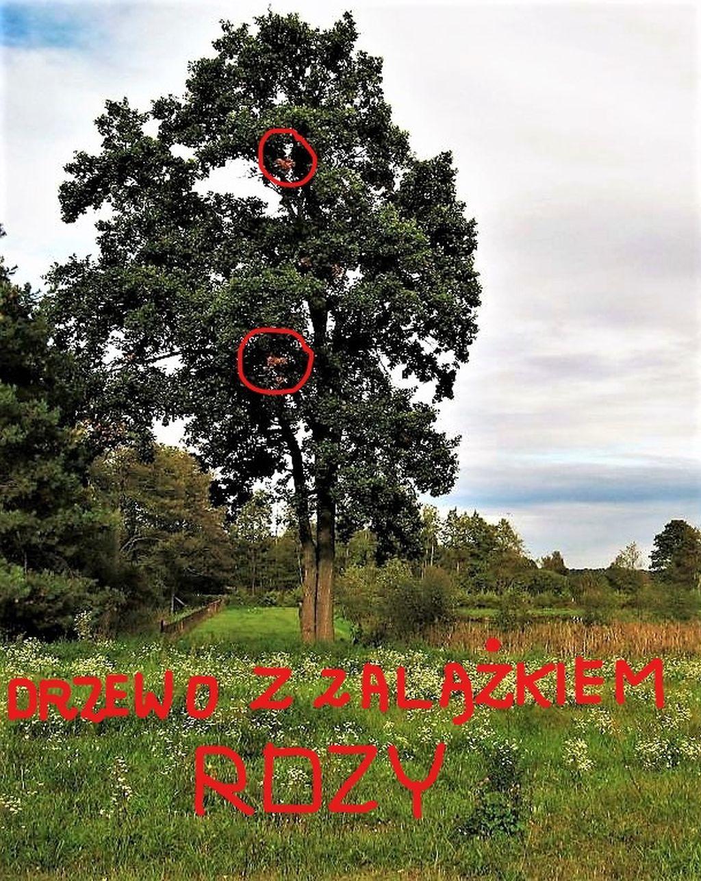 Inkedtu też drzewo_LI