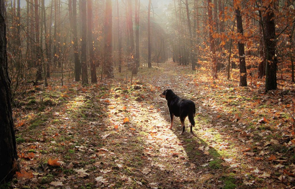 rdzawy krajobraz z psem