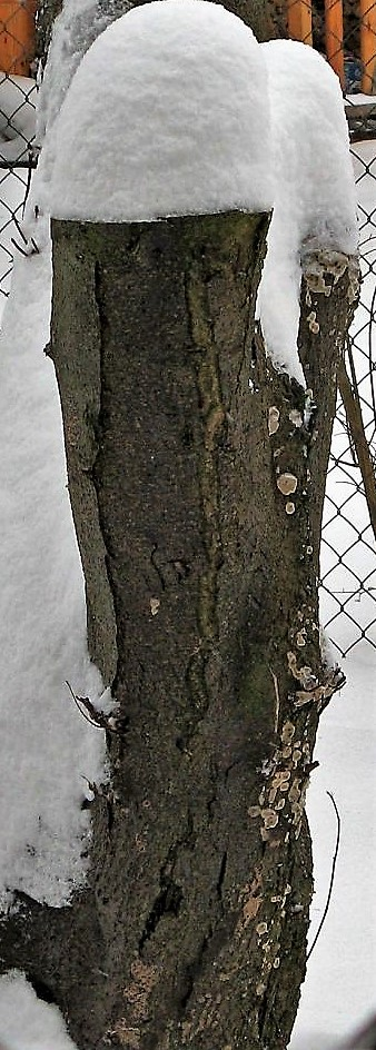 pieNki w śniegu