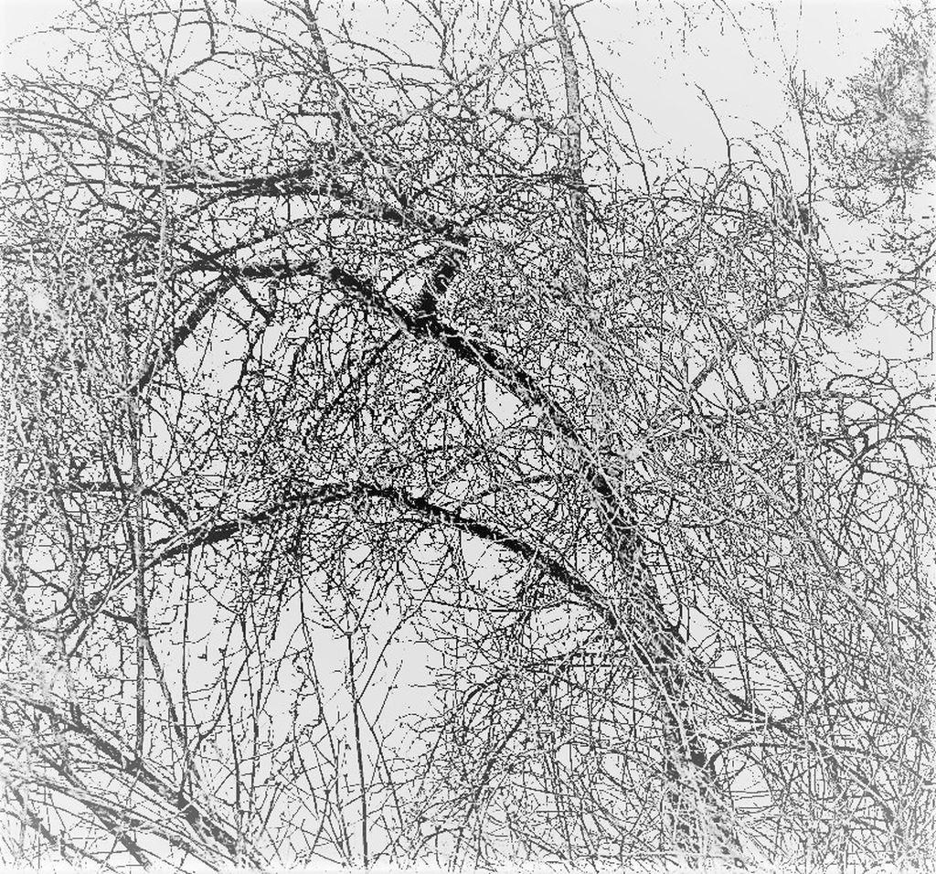 ążur zimowy